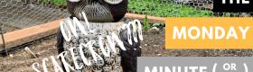 owl scarecrow monday minute