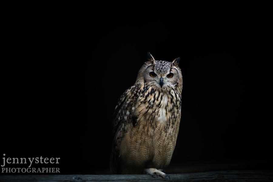 Secret-world-wildlife-rescue-photographer022