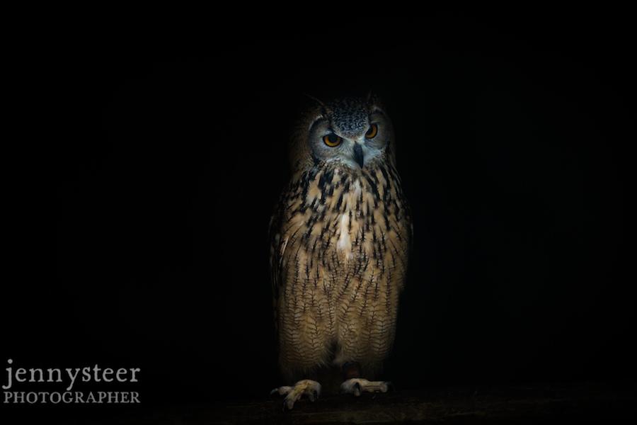 Secret-world-wildlife-rescue-photographer023