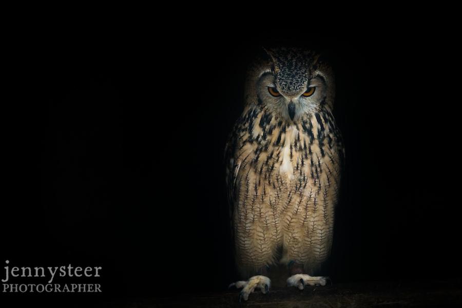 Secret-world-wildlife-rescue-photographer024