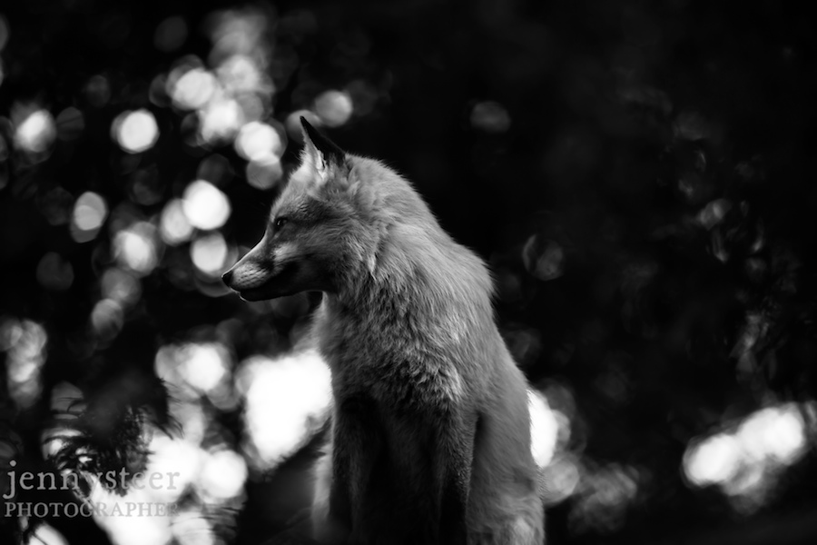 Secret-world-wildlife-rescue-photographer036