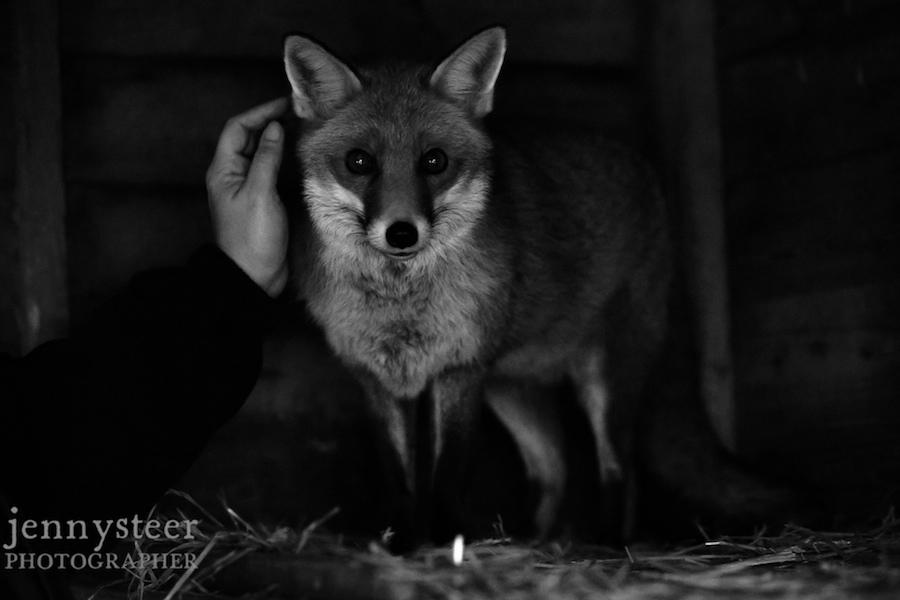 Secret-world-wildlife-rescue-photographer045