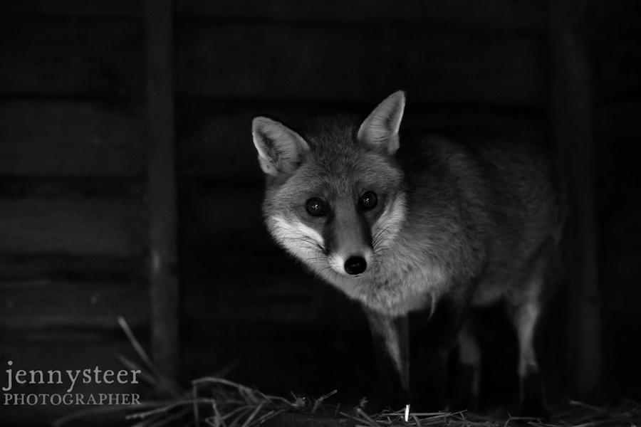 Secret-world-wildlife-rescue-photographer046