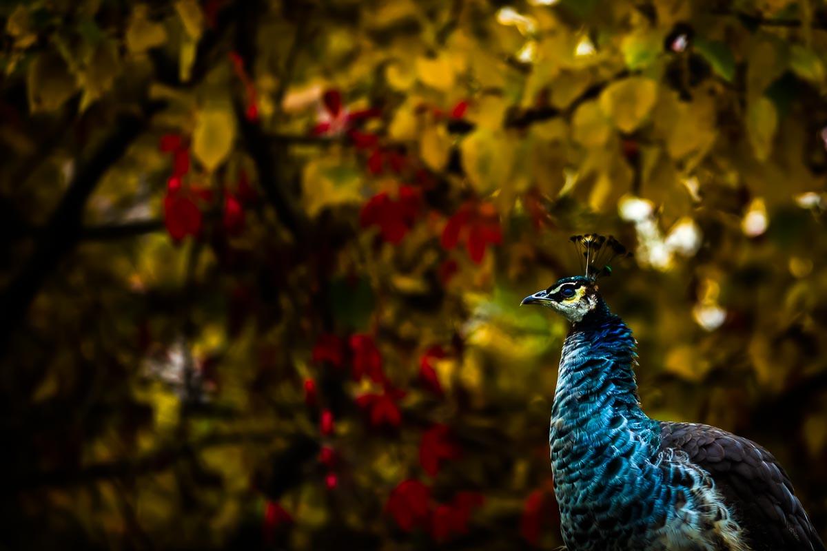 Bird_photographer_002