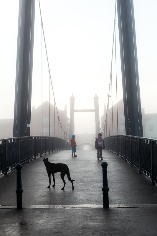 Lurcher_on_bridge_exeter_river_photographer_001