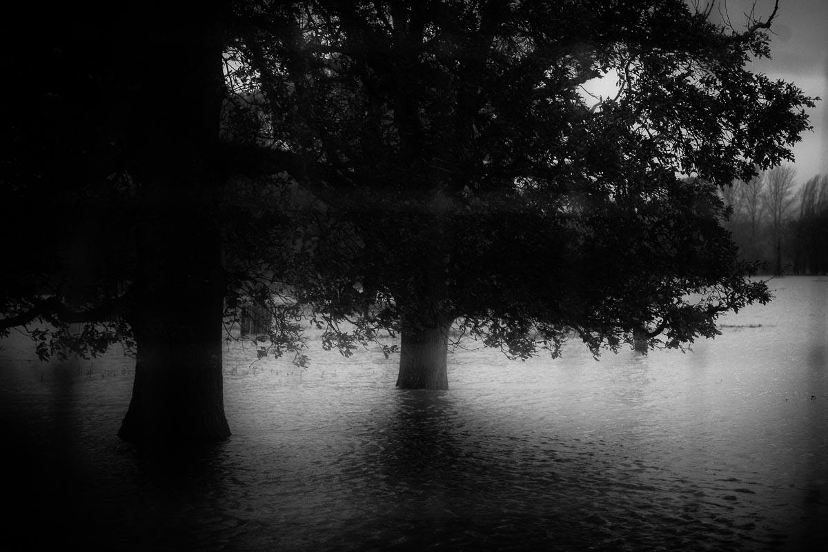 Trees_Landscape_photographer_005