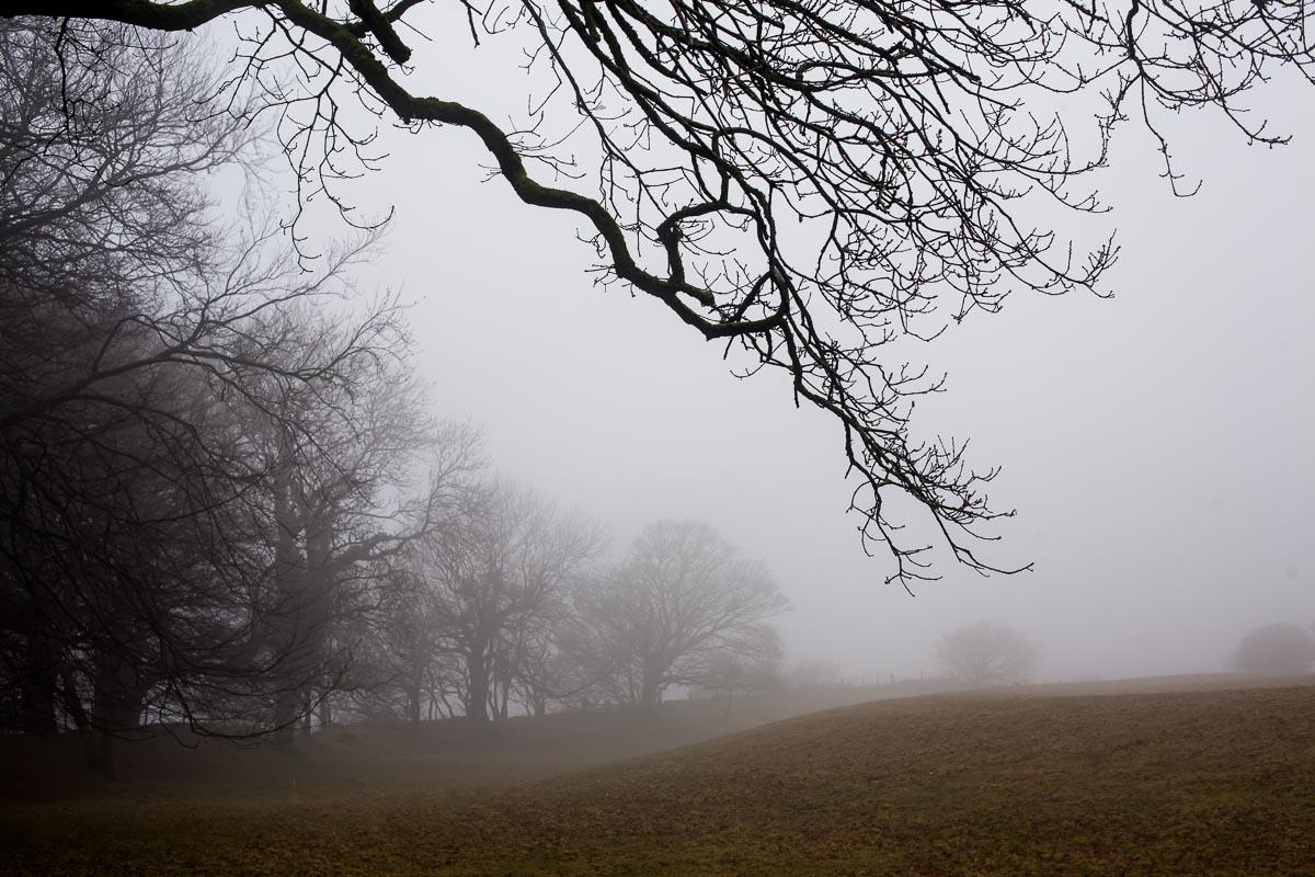 Trees_in_mist_photographer_001