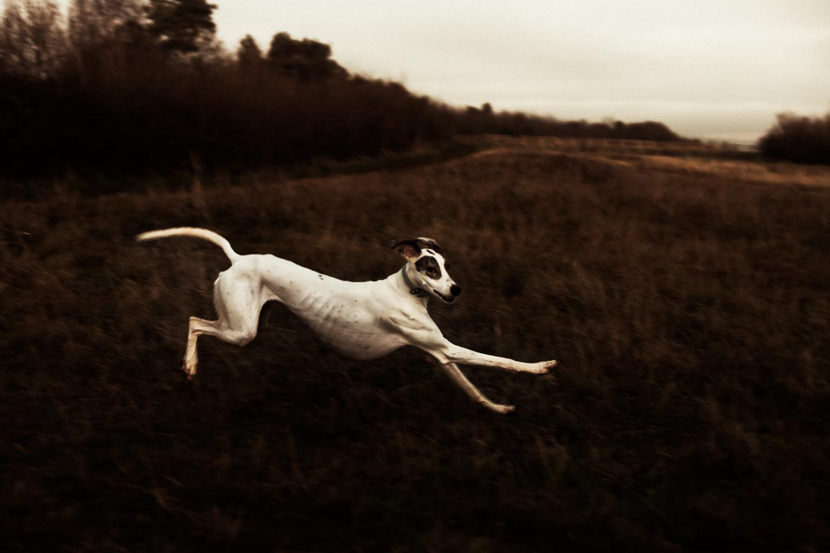 lurcher-leaping-painterly-dog_photographer_001