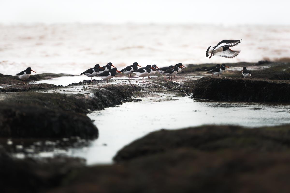 Documentary nature bird Artist photographer photojournalist, Devon, Dorset, Cornwall, Somerset, Exeter, UK, abroad