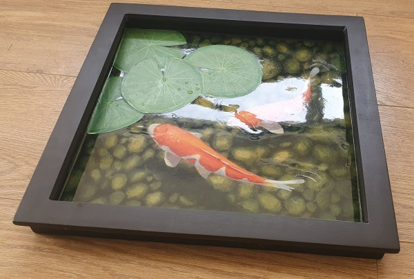 Koi carp in a pond with lily pads by jenny urquhart