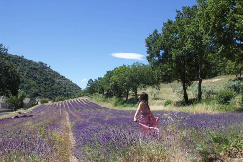 Senanque Abbey Lavender
