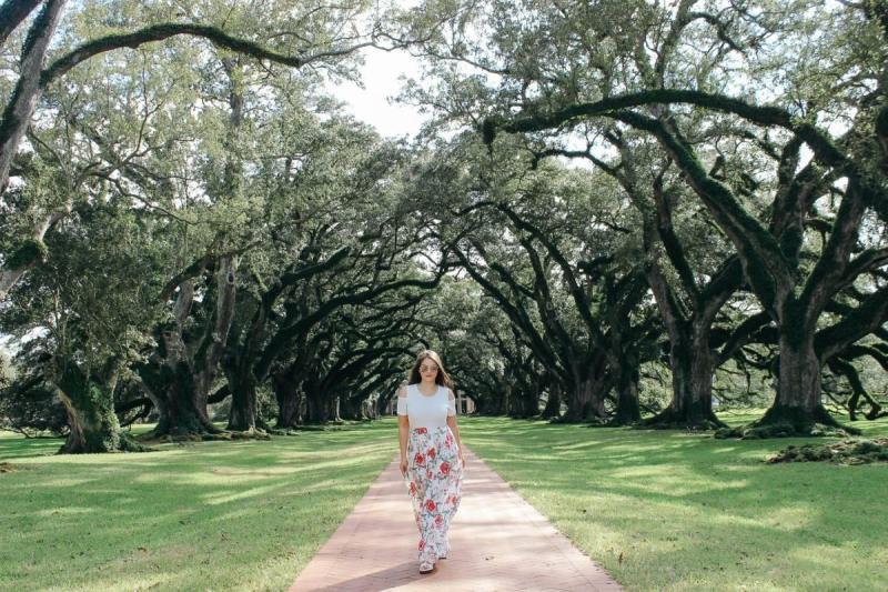 Walking down an alley of oak trees