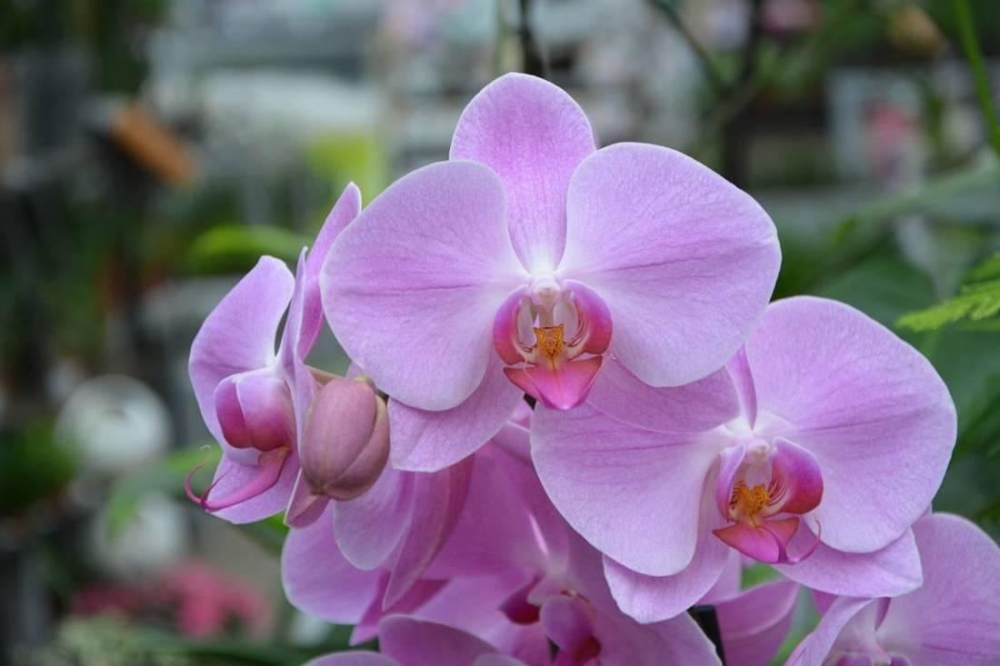 Florida day trip orchid farm