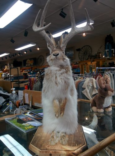 stuffed jackalope fm light store steamboat springs co jenphotographs