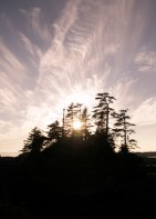 the silhouettes of these trees (sitkas and douglas firs i believe) kept me in joy all trip
