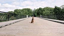 bella on a bridge