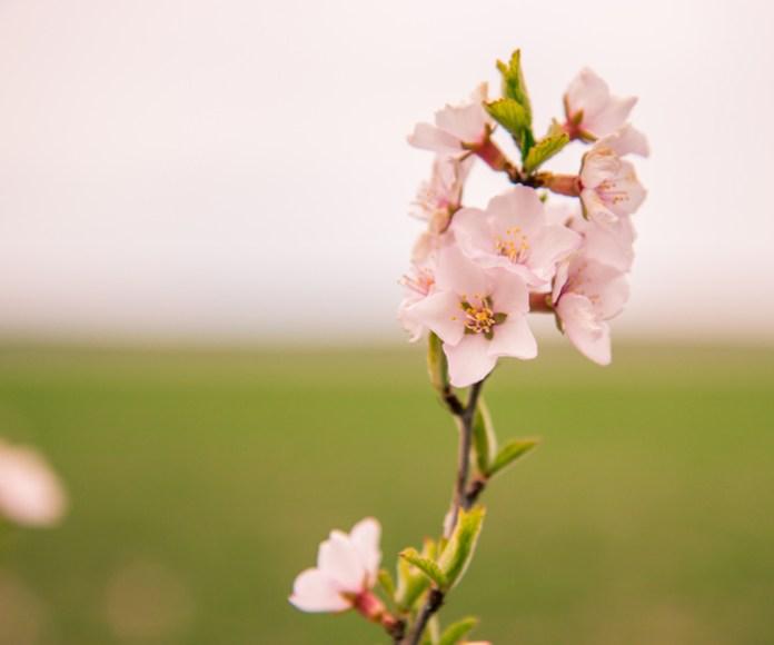 Week-13-Day-89-Flowers-5