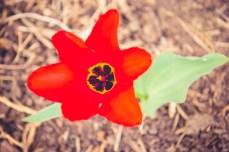 Week-13-Day-89-Flowers-9