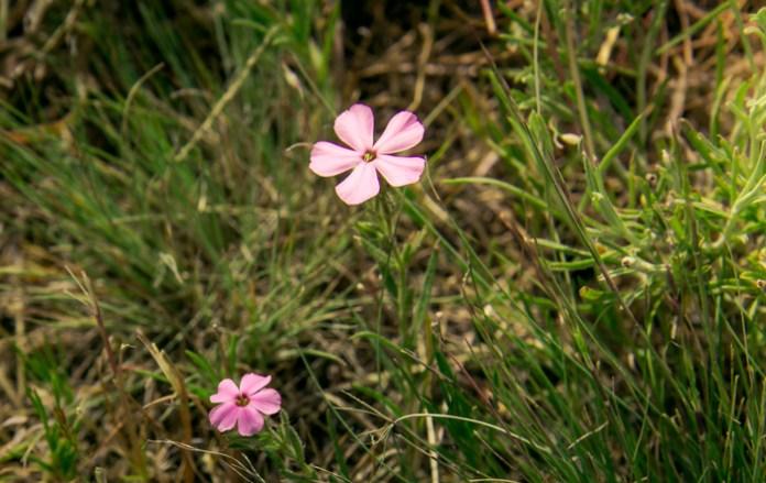 Week-18-Day-130-5-10-Flower-2