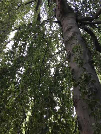 Inside a tree canopy