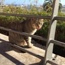 Spanish kitty