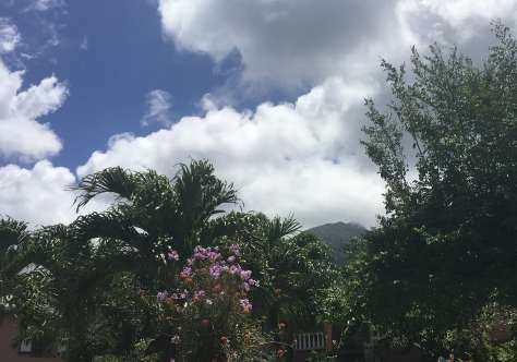 Nevis Peak behind flowers and mango trees