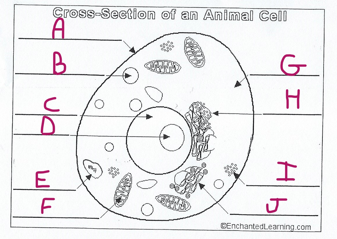 hight resolution of the cell part marked a