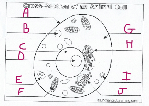 small resolution of the cell part marked a