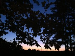 Sunset behind my sycamore in September 2012