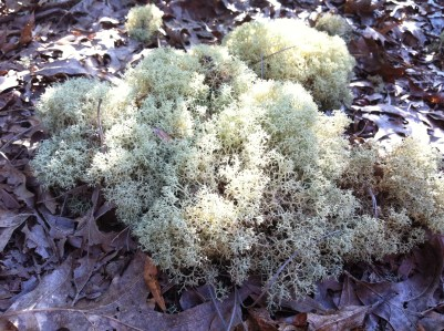 Moss in the sand hills
