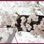 moodboard-hello-spring-printemps-inspiration-blog-equestre-je-peux-pas-jai-poney