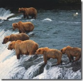 grizzly_fishing