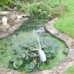 No Rocks Please We Re British The Garden Pond Blog