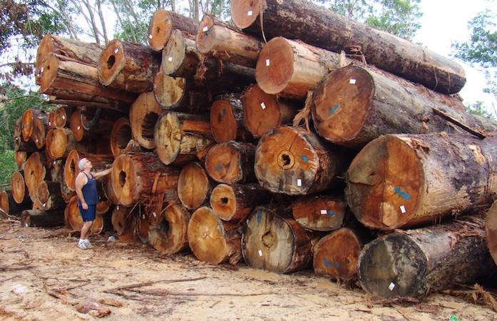 ALERT – Vietnam's Logging Scandal: Time for An International Boycott?