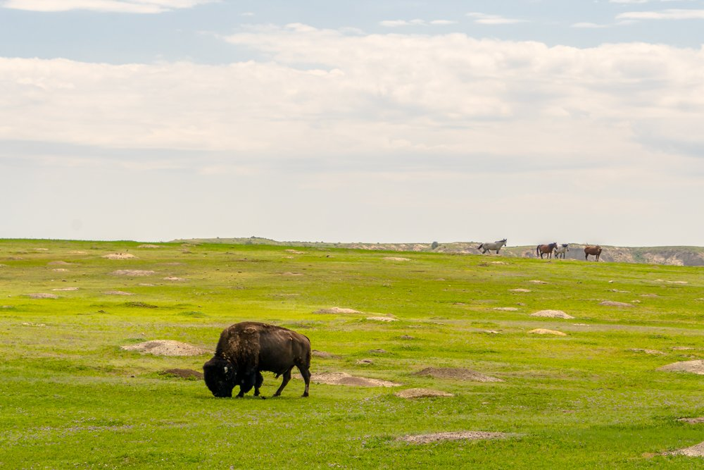 North Dakota and Theodore Roosevelt National Park