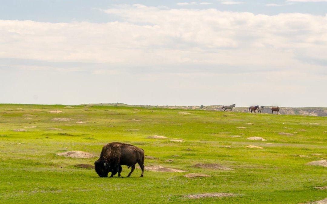 North Dakota and Theodore Roosevelt National Park