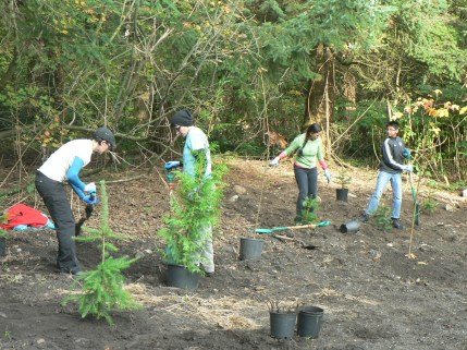 planting new trees after park staff clear blackberry bramble