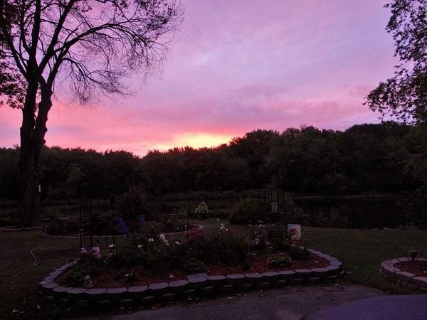 Tinthia Clemant Morning Garden Photo