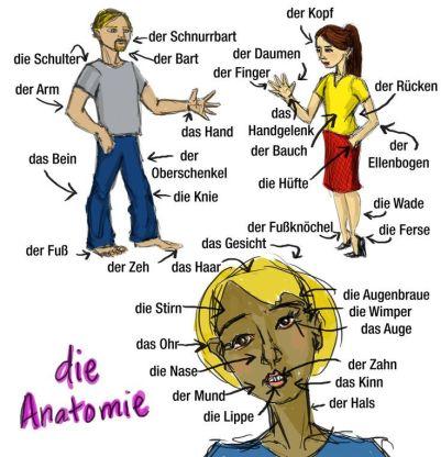 Anatomi Tubuh Manusia dalam Bahasa Jerman