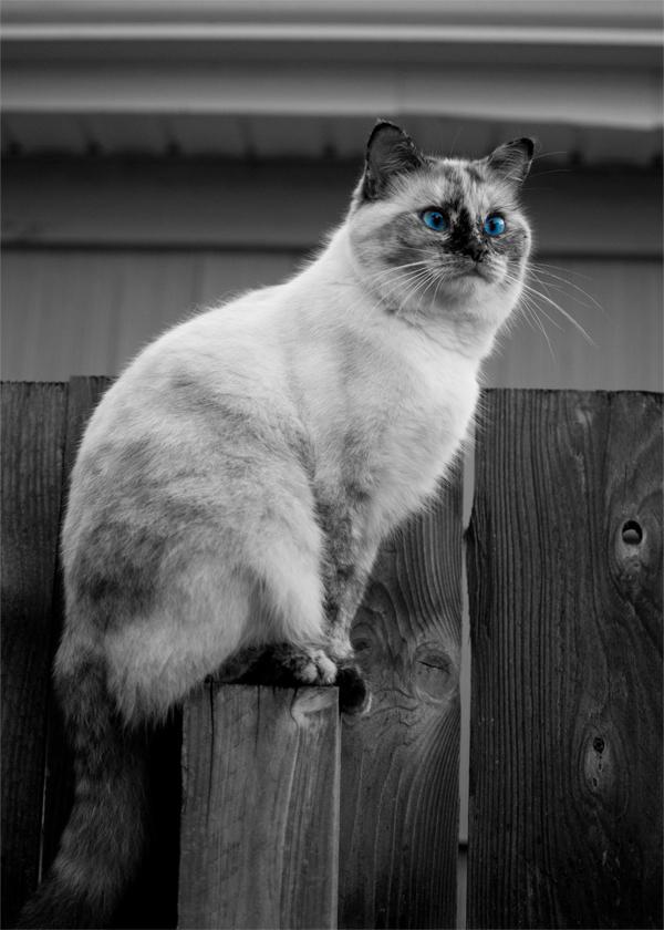 Mocha Blue