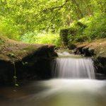 Een watervalletje op een Duits beekje in en zomers sfeertje. De geul waarin het waterstroom lijkt alsof de aarde van de beide oevers uiteen geesten is. Aan de linker laat een klimop takje zich naar beneden, richtig water, afzakken. Op de achterging zorgt het zonlicht voor een fris groen bladerdek in het bos.