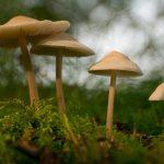 Vier lichtbeige paddenstoeltjes die van groot naar klein naast mekaar staan. Op de ondergrond zie je een mostapijtje en de achtergrond wordt gedomineerd door een wazig lijnenspel van groene takken en wit achtergrondlicht.