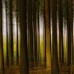 Een dennenbos met hoge rechte stammen waar de fris groene vegetatie achter het bois doorheen schijnt. Op één boomstam valt wat zonlicht waardoor die er qua helderheid uitspringt. Het tafereel is gefotografeerd met een lange sluitertijd terwijl de camera verticaal bewogen werd. Het resultaat is een vaag maar grafisch beeld van strepen die de boomstammen voorstellen.