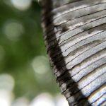 Detail uit de hoed van een hazenpootje, een paddenstoelensoort. Kenmerkend is het fijne zwarte streepjespatroon op de hoed. Door de paddenstoel langs onder te fotograferen, zien we in de achtergrond de groene kleur van het bladerdek, met lichtvlekken veroorzaakt door invallend zonlicht.