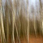 Dicht begroeid maar kaal berkenbosje in de herfst. Het tafereel is gefotografeerd met een lange sluitertijd terwijl de camera verticaal bewoog. Dit levert een vrij chaotisch maar sterk grafisch beeld op van lijnen een strepen die de berkenstammen en takken voorstellen. Bovenaan zijn blauwe en onderaan bruine kleurtinten te zien die respectievelijk de lucht en de bosbodem voorstellen.