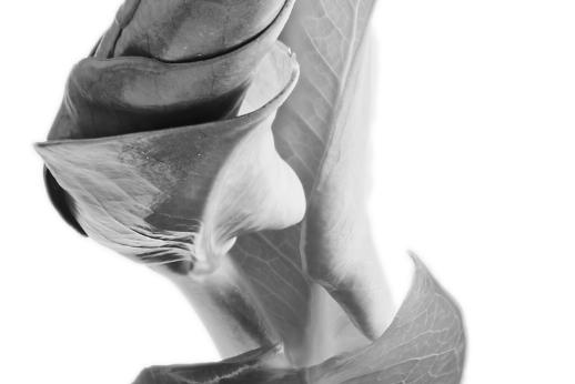 Dragon Plant  black and white portrait  featured