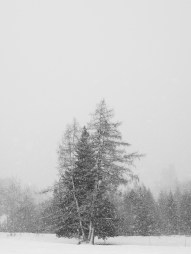 The winter trees are getting snow, at last