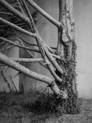 14/52 - The raw tree
