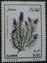 Algeria - Lavandula stoechas, 1982