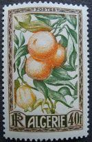 Algeria - Citrus: oranges & citrons, 1950